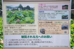 小山田神社周辺のハス田