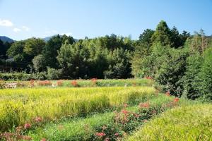 日陰道の田園風景